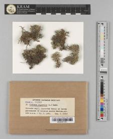 Cladonia alpestris (L.) Rabh.