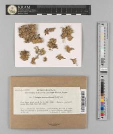 Dactylina madreporiformis (Ach.) Tuck.