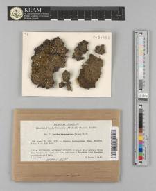 Lecidea berengeriana (A. Massal.) Nyl.
