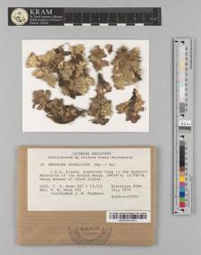 Nephroma expallidum (Nyl.) Nyl.