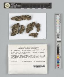 Parmelina tiliacea (Hoffm.) Hale