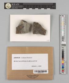 Callopisma rubellianum (Ach.) Th.