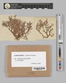 Evernia prunastri (Linn.) Ach. var. vulgaris