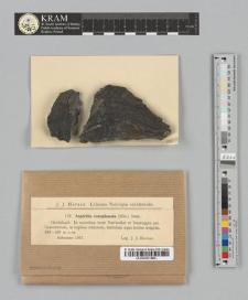 Aspicilia complanata (Kbr.) Stein.