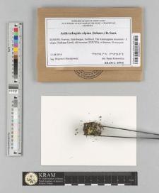 Arthrorhaphis alpina (Schaer.) R. Sant.