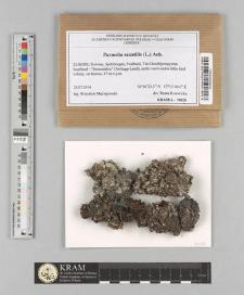 Parmelia saxatilis (L.) Ach.