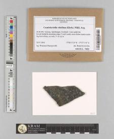 Candelariella vitellina (Ehrh.) Müll. Arg.