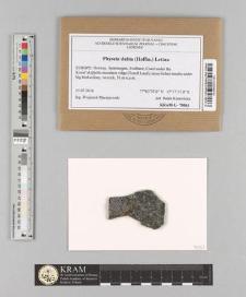 Physcia dubia (Hoffm.) Lettau
