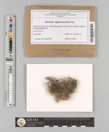 Alectoria nigricans (Ach.) Nyl.