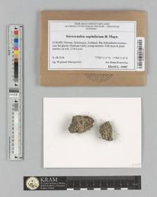 Stereocaulon capitellatum H. Magn.
