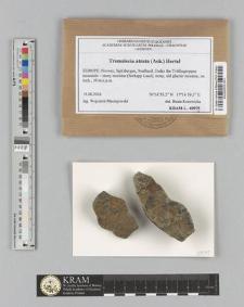Tremolecia atrata (Ach.) Hertel