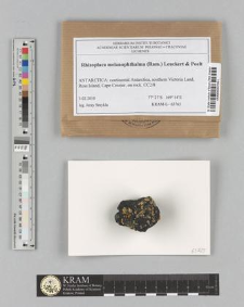 Rhizoplaca melanophthalma (Ram.) Leuckert & Poelt