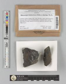 Rhizocarpon badioatrum (Flörke ex Spreng.) Th. Fr.