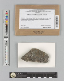 Rhizocarpon lavatum (Fr.) Hazsl.