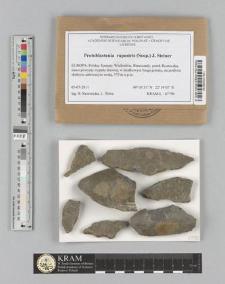 Protoblastenia rupestris (Scop.) J. Steiner