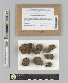 Psoroma hypnorum (Vahl) Gray