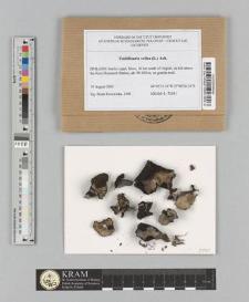 Umbilicaria vellea (L.) Ach.