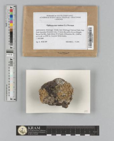 Ophioparma ventosa (L.) Norman
