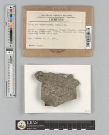 Caloplaca erythrocarpa (Pers.) Zw.