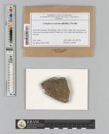 Caloplaca saxicola (Hoffm.) Nordin