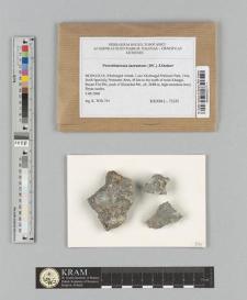 Protoblastenia incrustans (DC.) J.Steiner