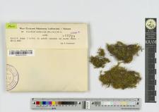 Ctenidium molluscum (Hedw.) Mitt.