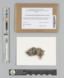 Coccocarpia erythroxyli (Spreng.) Swinscow & Krog