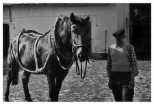 A horse in a collar