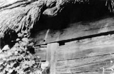 Chałupa sumikowo-łątkowa