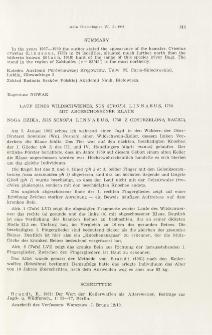 Lauf eines Wildschweines, Sus scrofa Linnaeus, 1758 mit abgeschossener Klaue; Noga dzika, Sus scrofa Linnaeus, 1758 z odstrzeloną racicą