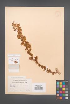 Berberis heterobotrys [KOR 12028]