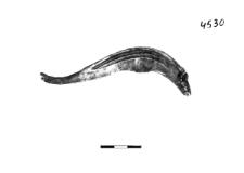 sieckle (Karmin) - chemical analysis