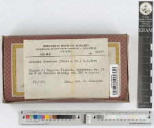 Grifola frondosa (Dicks.: Fr.) S.F.Gray