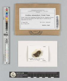 Gyalidea subscutellaris (Vězda) Vězda