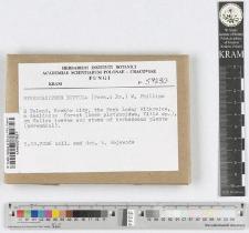 Hymenochaete scutula (Pers.: Fr.) W. Phillips