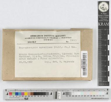 Hygrophoropsis aurantiaca (Wulf.: Fr.) J. Schrӧt.