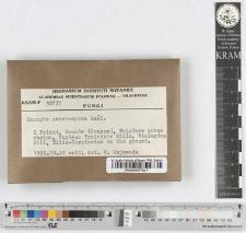 Inocybe breviseta (P. Karst.) J. Erikss.