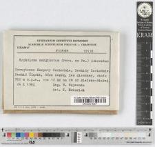 Hypholoma elaeodes (Fr.) Gill.