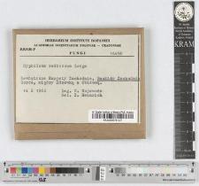 Hypholoma ericaeoides P. D. Orton
