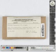 Inocybe pelargonium Kühner