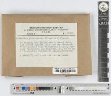 Lactarius deliciosus (L.) S. F. Gray