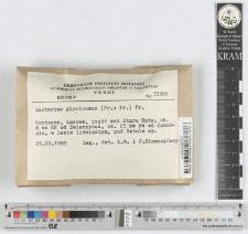 Lactarius deliciosus (L.: Fr.) S. F. Gray