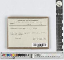 Lactarius subdulcis (Bull.: Fr.) Gray