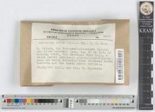 Lactarius acris (Bolt.: Fr.) S. F. Gray