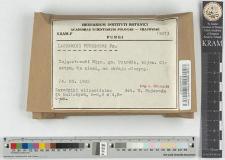 Lactarius pubescens Fr.