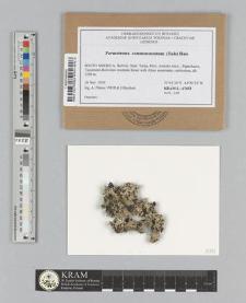 Parmotrema commensuratum (Hale) Hale