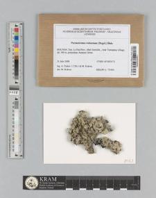 Parmotrema robustum (Degel.) Hale