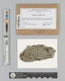 Crocynia pyxinoides Nyl.