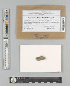 Mycoblastus alpinus (Fr.) Th. Fr. ex Hellb.
