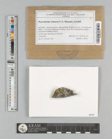 Psorotichia schaereri (A. Massal.) Arnold